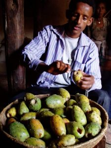 Hailay (Tesfa Tours driver) peeling a prickly Pear - Beles fruit!