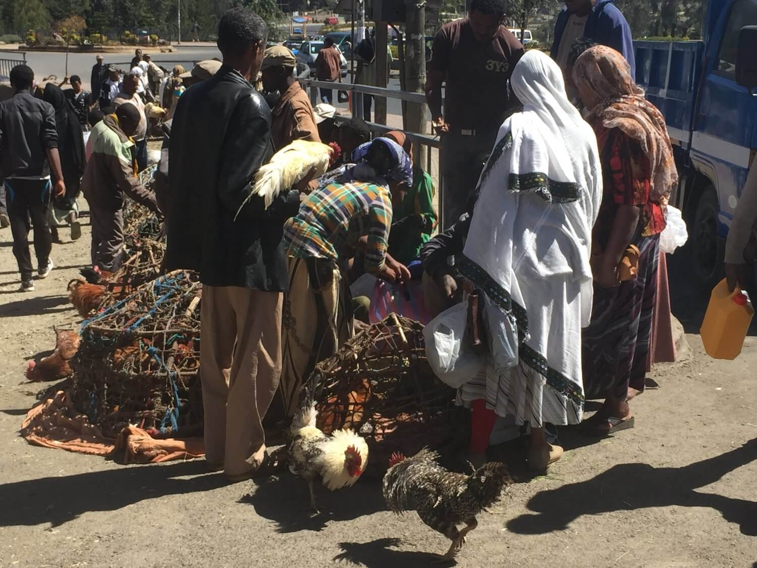 Chickens for sale on street corners